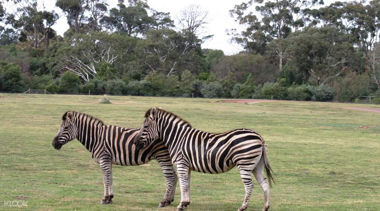 发现生活其中的斑马,犀牛,长颈鹿,以及其它奇妙的热带草原野生动物